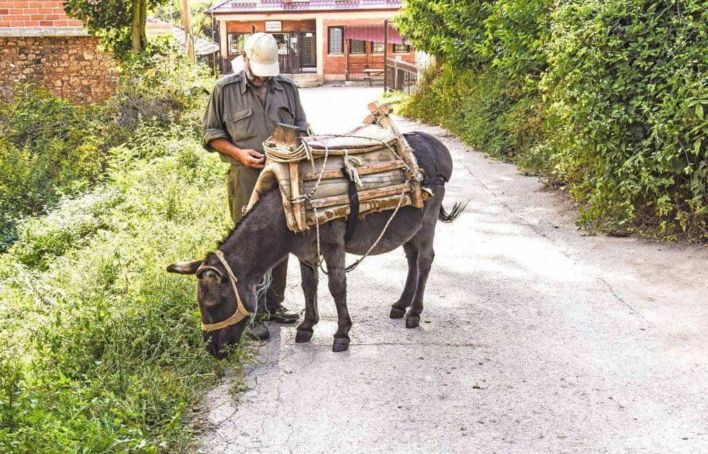 Man standing beside a donkey on a street in the Kuratica village