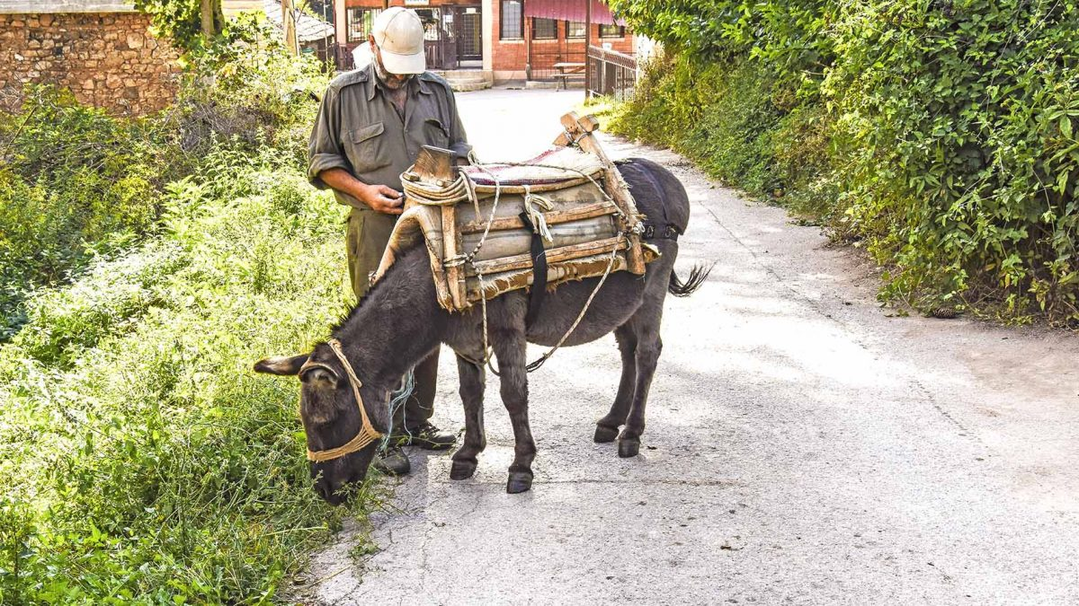 Man standing beside a donkey on a street in the Kuratica village