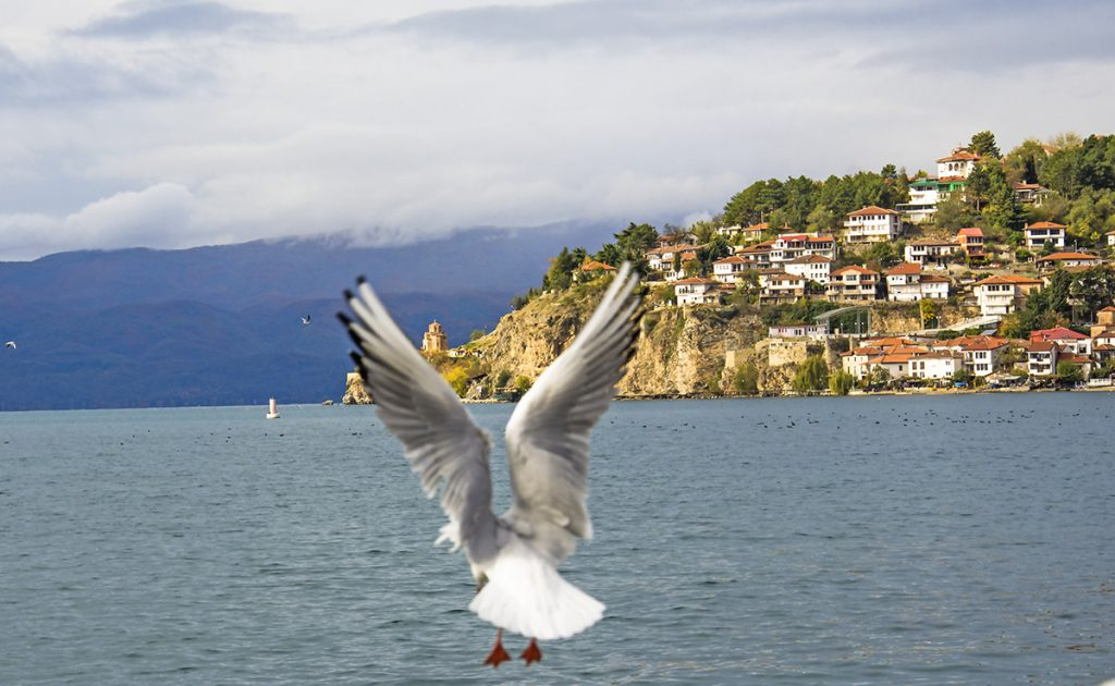 Gull flying above Ohrid lake with Ohrid city on the background
