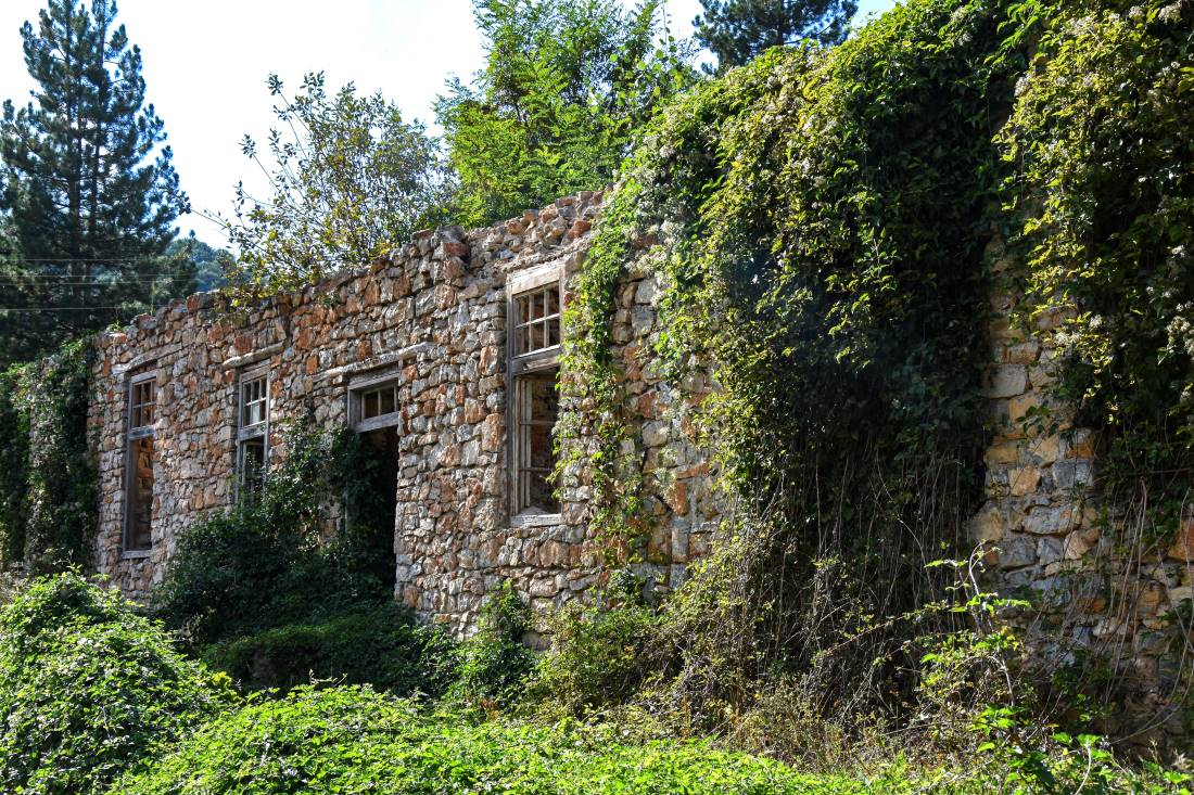 An old house overgrown with ivy in the village of Kuratica