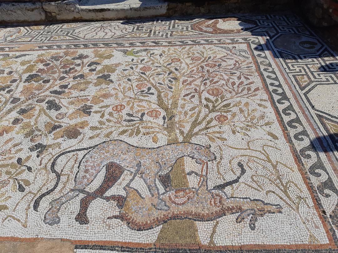 Leopard killing deer presented in mosaic floor in Heraclea Lyncestis near Bitola