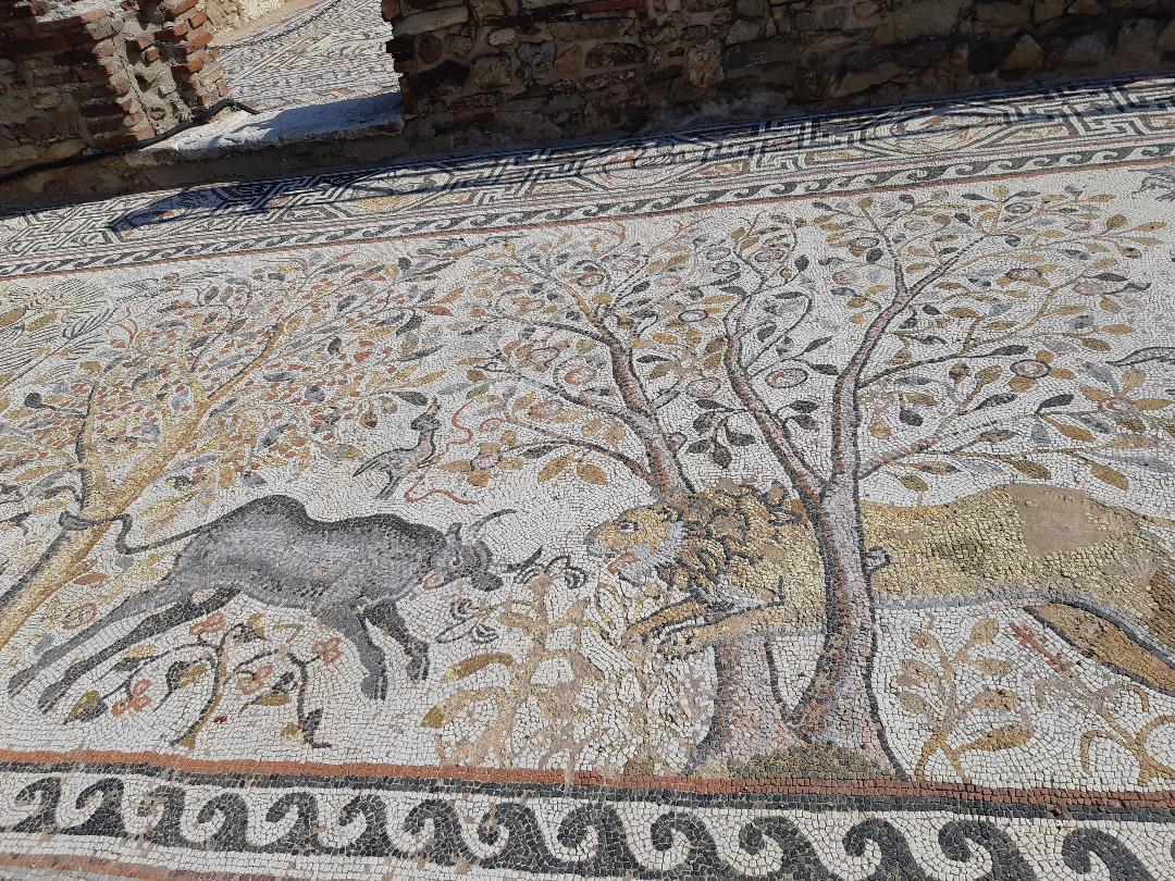 16 collors mosaic floors in Heraclea Lyncestis near Bitola
